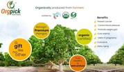 Buy Natural Mangoes Online in Pune 100% Organic