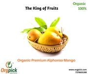 Buy 100% Organic Premium Alphonso Mango in Pune