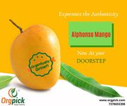 Order Organic Mangoes Online Organically Grown Alphonso